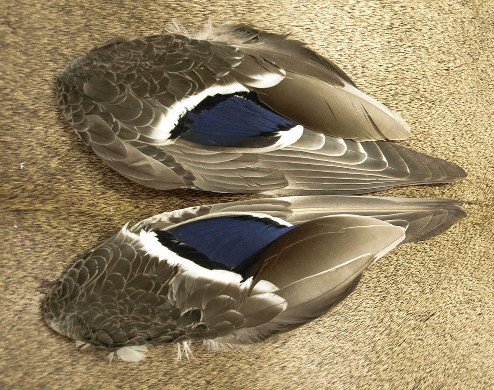 Nature's Spirit Select Whole Mallard Wings